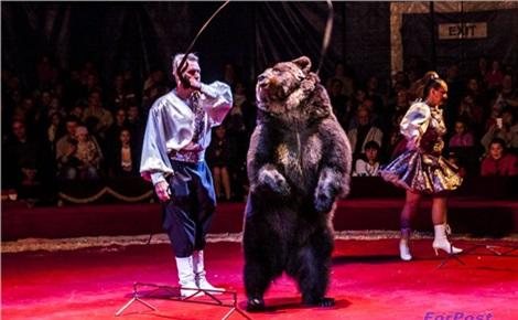 Московский цирк Ю. Никулина в Красноярске
