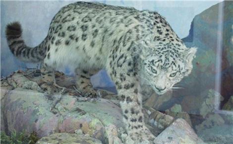 Природное наследие Красноярского края