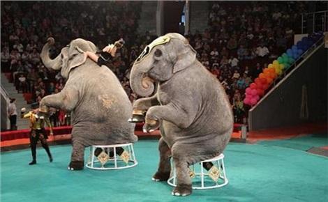 Шоу слонов-великанов