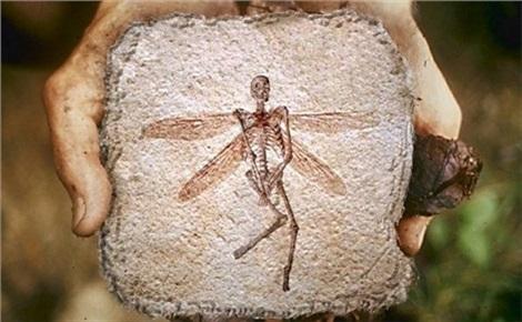 Мифы и реальность в археологии