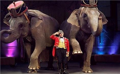 Слоны и тигры