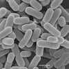 Кишечные бактерии «лечат» грипп