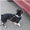 Пропавшая при нападении наВалерия Терешкина собака нашлась