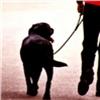 ВКрасноярске пока непридумали, как бороться снерадивыми владельцами собак
