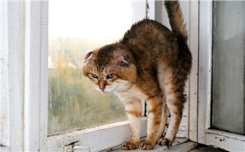 Итоги недели вКрасноярске: Крысы ибилеты