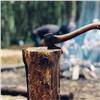 Загод вчерте Красноярска 79раз незаконно рубили лес