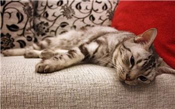 «Умный» диван вместо кровати