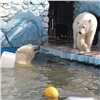 Вкрасноярском зоопарке белые медведи открыли купальный сезон