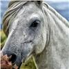 Прикрывавшаяся разведением лошадей наркоторговка осуждена вКрасноярском крае