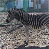 Животные «Роева ручья» переселяются воткрытые вольеры
