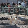 Пингвины вкрасноярском зоопарке открыли купальный сезон (видео)