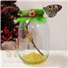 Красноярцам предложили выращивать бабочек дома