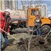 Вкрасноярском Покровском высадили деревья наАллее Памяти