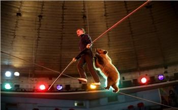 Как это сделано: Красноярский цирк