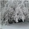 Майский снегопад вКрасноярске повалил деревья иоборвал провода