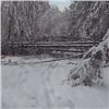 Непогода спровоцировала массовый «снеголом» вкрасноярском заповеднике (видео)