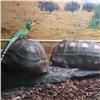Ящерицы из«Роева ручья» спасают черепах оттараканов
