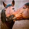 ВКрасноярске официально запретили лошадей вместах «культурного» отдыха