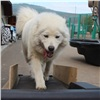 Собаки вкрасноярском зоопарке встали набеговую дорожку (видео)