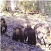 Красноярцев предупредили обопасных медведях на«Столбах»