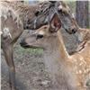 Вкрасноярском зоопарке случился бэби-бум