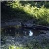На«Столбах» рассказали, как купается черный коршун (видео)