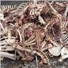Свалку костей животных нашли вцентре Красноярска (видео)
