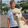 Посетители красноярского зоопарка смогут пообщаться сальпакой