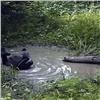 Новые кадры купания медведей показал красноярский заповедник (видео)