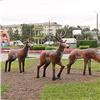 ВКрасноярске появились «Три оленя»