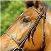 Владелицу конного клуба вЗеленогорске будут судить засмерть дочери