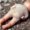 ВШушенском ищут мать обнаруженного вподъезде мертвого младенца