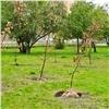 Вкрасноярском Студгородке начали высадку яблоневого сада