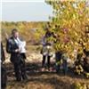 Осенью вКрасноярске высадят 2000 деревьев