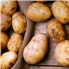 На красноярском интернет-аукционе упали оптовые цены на картошку