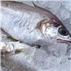 ВКрасноярском крае оштрафовали поставщика опасной рыбы в детдом