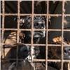 ВКрасноярске запретили усыплять незаразных собак