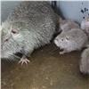 Вкрасноярском зоопарке случился бэби-бум угрызунов