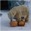 Тигрица ибелый медведь из«Роева ручья» предсказали итоги выборов вСША (видео)