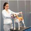 Более 400 собак примут участие вкрасноярской выставке «Зоомир»
