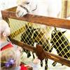 Груминг-шоу, кудрявые голуби и мини-пиги: в Красноярске стартует «Зоомир»