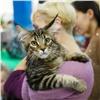 Ввыходные красноярцев приглашают накрупнейшие выставки собак икошек