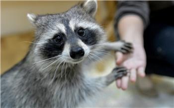 Как это сделано: контактный зоопарк вКрасноярске