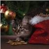 Красноярцам рассказали, как правильно выбрать новогоднюю ёлку