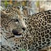 Вполиции раскрыли подробности нападения леопарда назрительницу цирка вБоготоле (видео)