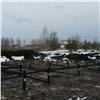 Компания «Основа» рассказала опреимуществах винтовых свай при строительстве загородных домов