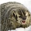Красноярец встретил на«Столбах» скрытного хищника
