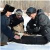Ачинцев призвали делиться березовыми вениками сголодными редкими косулями