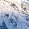 Смелые благородные олени позируют туристам вкрасноярском заповеднике