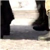«Сбежать оннемог!»: военные скрыли детали пропажи красноярского контрактника (видео)